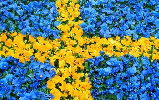 flag-swedish-640x405